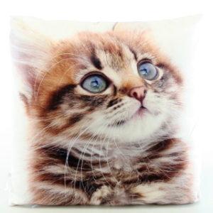 Polštářek fotopotisk kočka