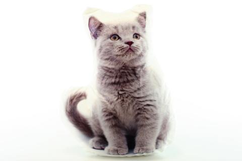 Polštářek fotopotisk šedé kotě
